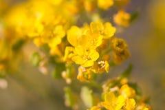 一朵俏丽的花以黄色 图库摄影