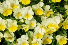 一朵偶然花开花的花 免版税图库摄影