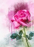 一朵充满活力的桃红色玫瑰色花的水彩图画 E r 库存例证