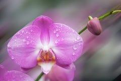 一朵兰花的特写镜头与水下落的 免版税库存照片
