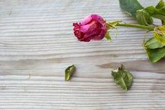一朵凋枯的红色玫瑰在木背景 库存照片