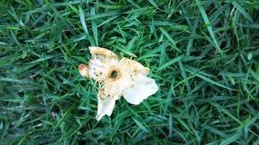 一朵凋枯的花在绿草落 库存图片