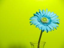 一朵唯一五颜六色的花 库存照片