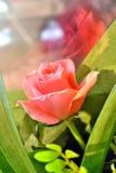 一朵唯一玫瑰讲百万个词 免版税库存图片