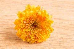 一朵唯一黄色菊花花的宏观射击 图库摄影