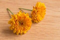 一朵唯一黄色菊花花的宏观射击 库存图片
