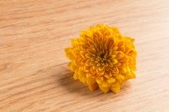 一朵唯一黄色菊花花的宏观射击 免版税图库摄影