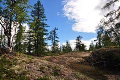 一朵夏天森林和大白色云彩在明亮的天空 免版税库存图片