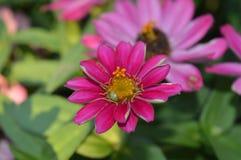 一朵好花本质上 免版税库存图片