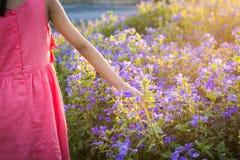 一朵小女孩感人的野花的手在草甸 库存照片