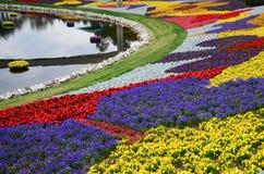 一朵小池塘和花在Epcot 库存照片