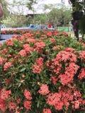 一朵小的红色花 免版税库存照片
