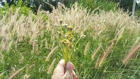 一朵小的花在我的手上 免版税库存照片