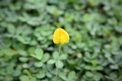 一朵小的花在森林里 图库摄影