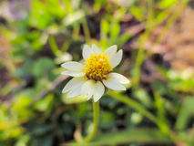 一朵小的花 库存图片