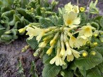 一朵小美丽的花,那在春天增长 免版税图库摄影
