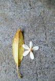 一朵干燥叶子和花的统一性 库存图片