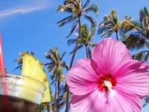 热带花和饮料 免版税库存照片