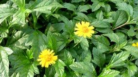 一朵微小的黄色花 免版税库存图片