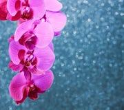 一朵明亮的桃红色兰花的分支的花卉贺卡在b的 图库摄影