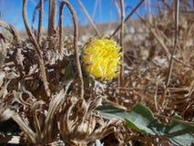 一朵明亮的被隔绝的花 库存图片