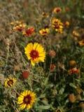 一朵普通的小的花在秋天 库存照片