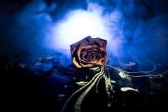 一朵枯萎的玫瑰符号化失去的爱,离婚,或者一个坏关系,死者在与烟的黑暗的背景上升了 库存图片