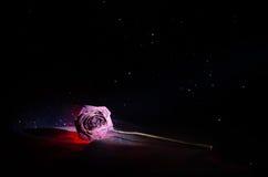 一朵枯萎的玫瑰符号化失去的爱,离婚,或者一个坏关系,死者在黑暗的背景上升了 免版税图库摄影