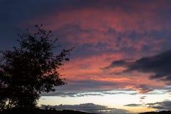 一朵树剪影和美丽的红色云彩在日落,做抽象形状 库存图片