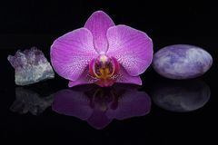 一朵桃红色兰花的花区别紫色的石头之间的在黑背景 免版税库存图片