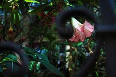 一朵桃红色花和绿色叶子的一个花卉样式 库存照片