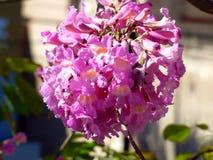 一朵桃红色花的前景 免版税库存图片