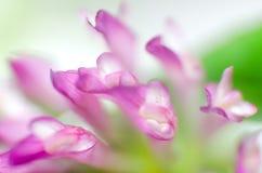 一朵桃红色花的瓣的宏指令 免版税库存图片