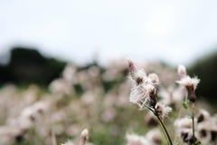 一朵温暖的夏天和花在路支持 免版税图库摄影