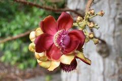 一朵热带花 库存照片