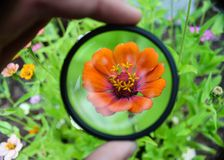 一朵特别花在庭院里 图库摄影
