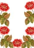 一朵玫瑰的框架与芽的 背景查出的白色 库存照片