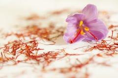 一朵番红花花和很多干燥番红花类型 库存图片