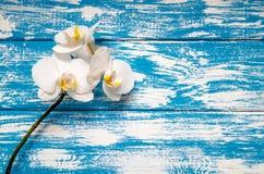 一朵白色兰花的分支 免版税库存图片