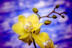 一朵白色兰花的分支 库存照片