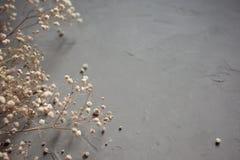 一朵白色干燥麦花的花束在灰色背景的 顶视图 库存图片