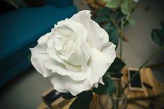 一朵白色玫瑰 免版税库存照片