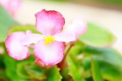 一朵相当桃红色和白色兰花在下午太阳的一个热带庭院里 免版税库存图片