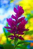 在夏日的桃红色花 图库摄影