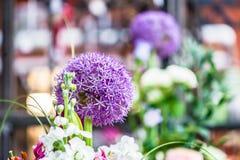 一朵紫色圆的葱属花的特写镜头在一家现代商店 免版税库存照片