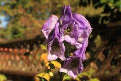 一朵紫色花的特写镜头 免版税库存照片