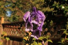 一朵紫色花的特写镜头 库存照片