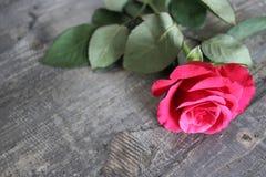 一朵红色玫瑰在一张木桌上说谎 免版税库存照片