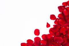 浪漫红色玫瑰花瓣框架 免版税库存图片