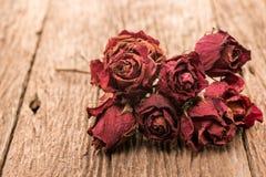 一朵红色玫瑰花的干燥芽 图库摄影